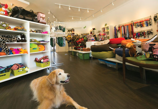 Exploring The Benefits Of Pet Stores