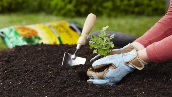 Understanding the basics of gardening